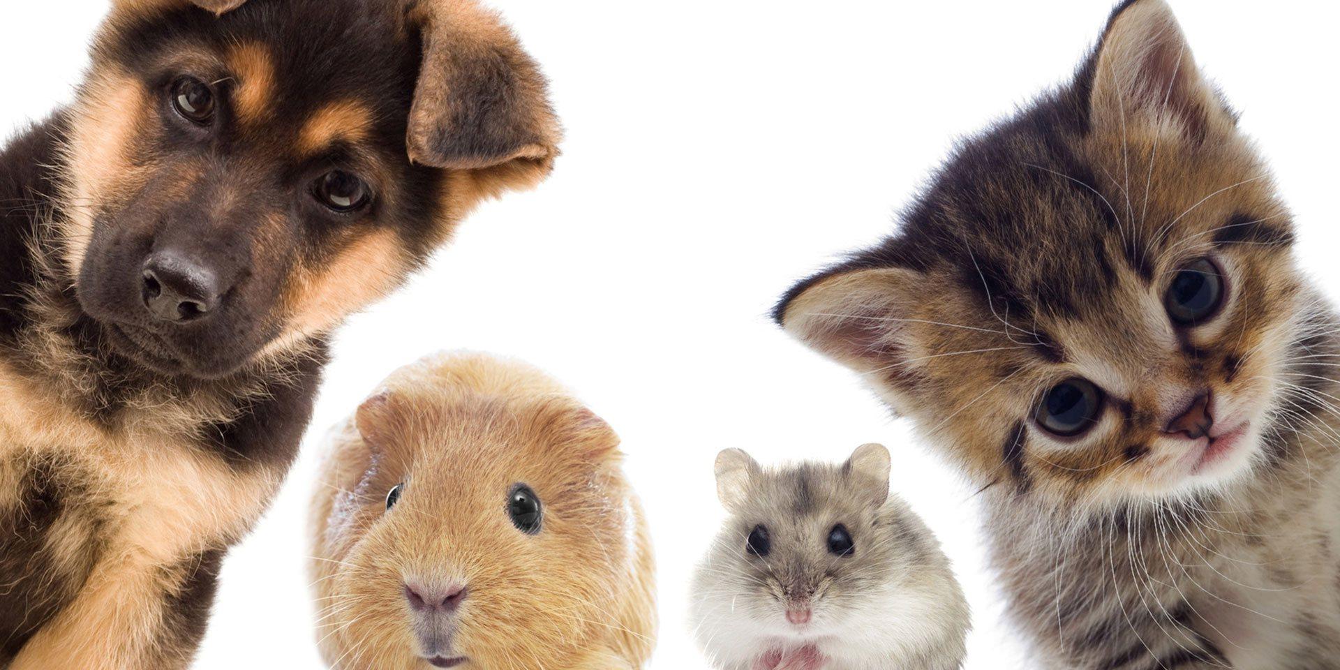 ... leczenie zwierząt domowych.